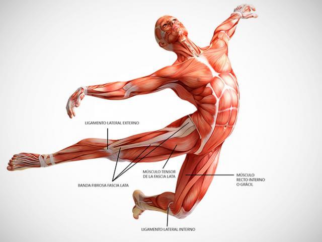 6 curiosidades de los músculos