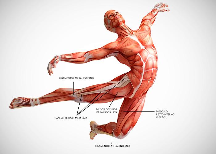 Composición muscular de la mujer