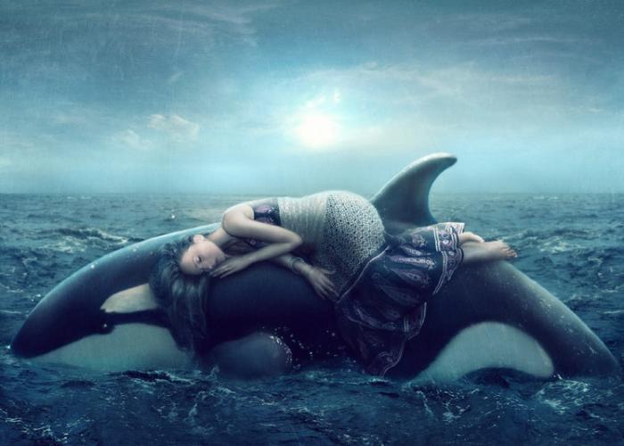 Soñando sobre una orca