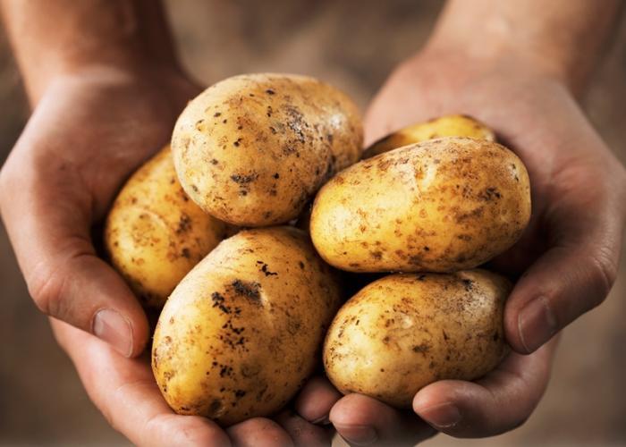 Patatas mostradas en dos manos