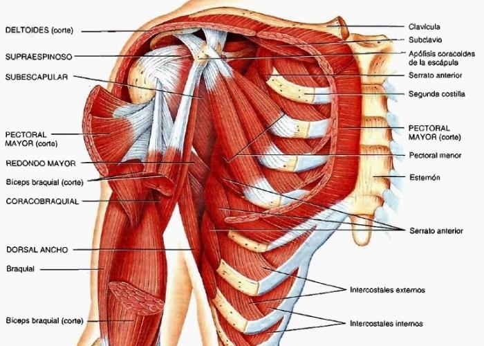 Nombres en la articulación del hombro