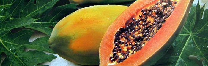 Papaya cortada