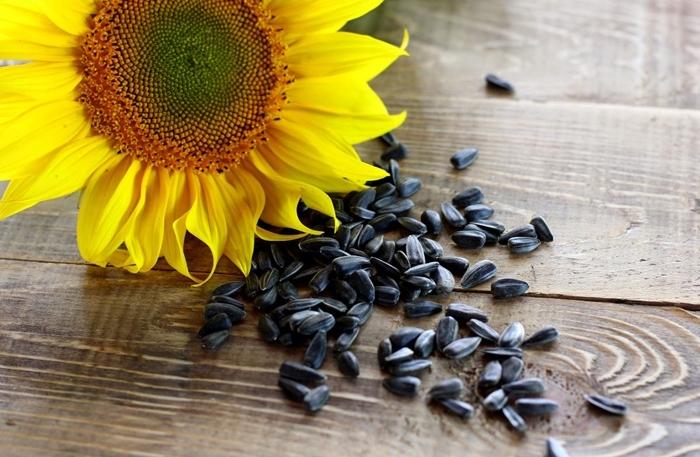semilla de girasol sirve para bajar de peso