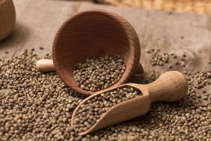 semillas-canamo