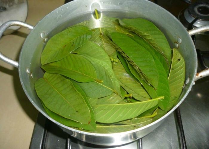 Infusión hojas mango
