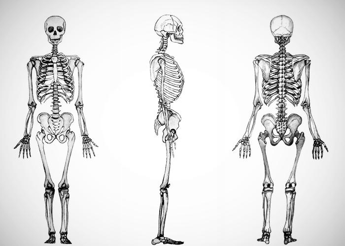 Tres esqueletos en diferentes posiciones